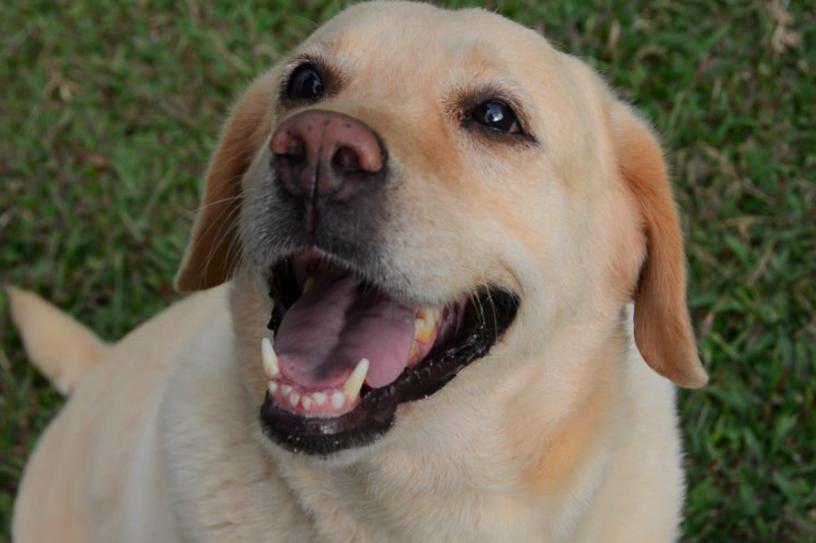 Dog Friendly Hotels in Deep Creek Lake Maryland